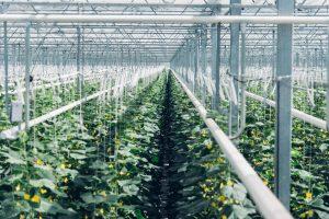 14 Gewächshäuser werden mit gefiltertem CO2 von Climeworks beliefert