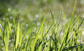 Außer-Haus-Service - Neue Verpackung aus Gras