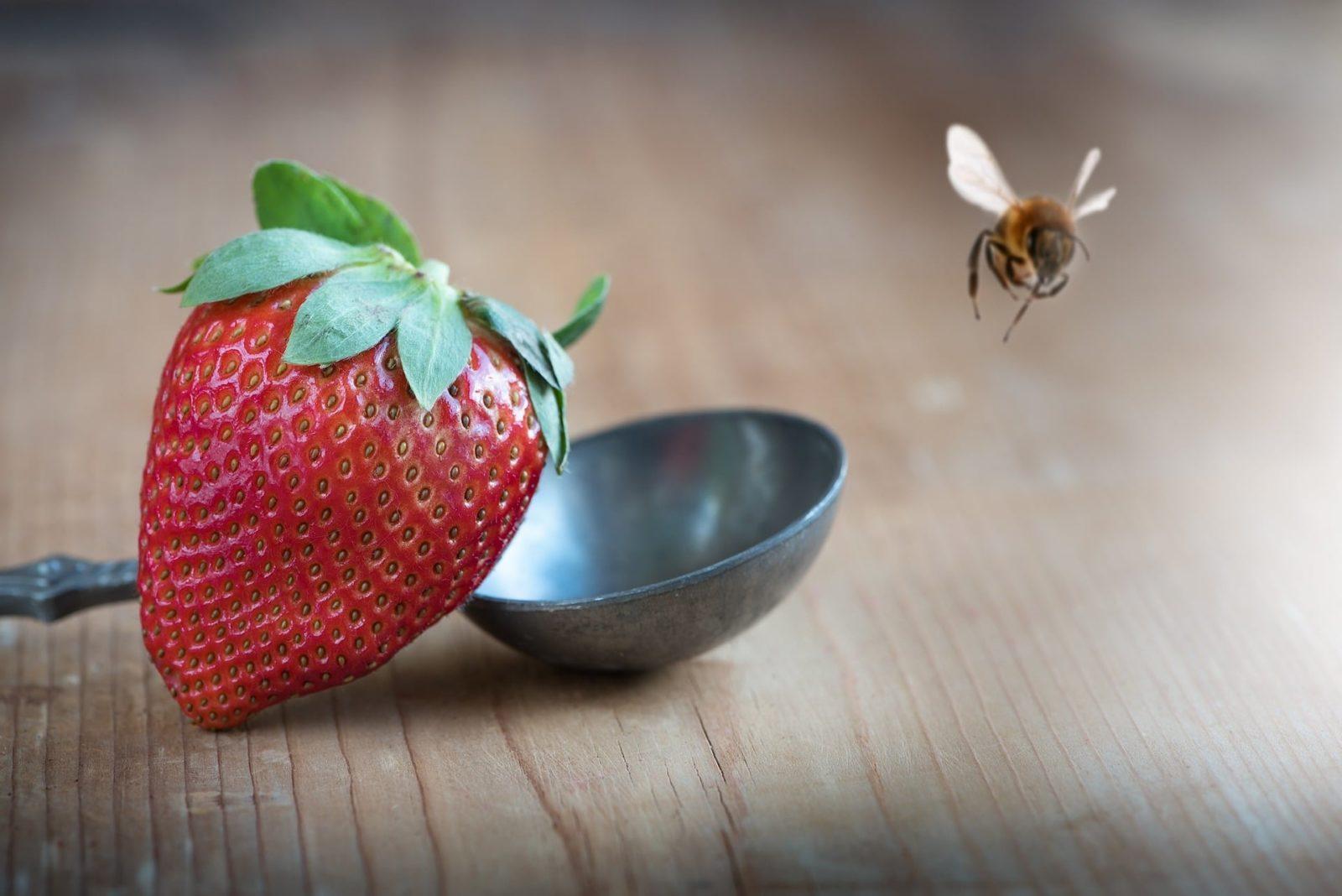 Bessere Beeren durch Bienen-Bestäubung