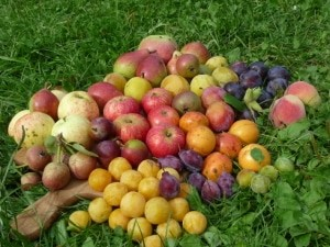 Boomgarden-Park: Arche Noah für alte Obstsorten