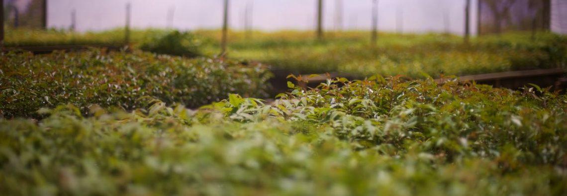 Ecosia planzt mehr Bäume als je zuvor