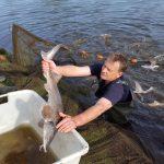 Hechtfang - Fischzucht Reese