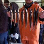 Frischen Fisch fischte Reeses Fischer - Fischzucht Reese