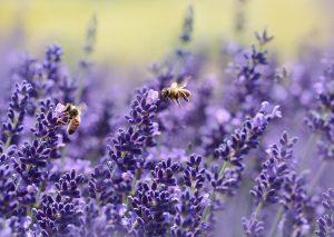 Die Sache mit den Bienen