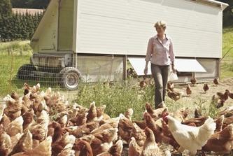 Hühner auf Rädern