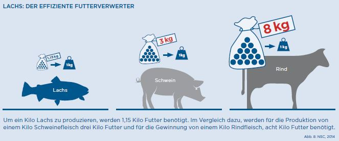 Norwegisches Fischfutter - effizienter Futterverwerter
