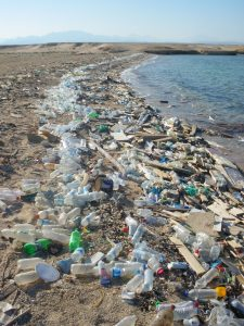 Plastikmüll im Meer - Green Chefs
