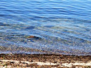 Seegras zur Dämmung - Meer davon!