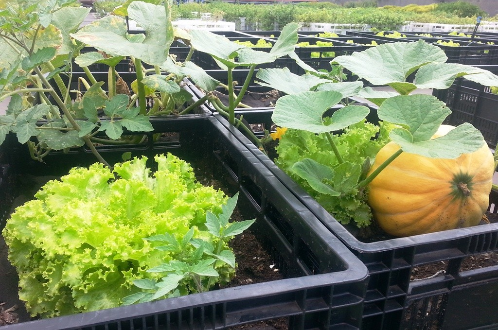 Wächst und gedeiht dank Dünger aus der eignen Kompostieranlage