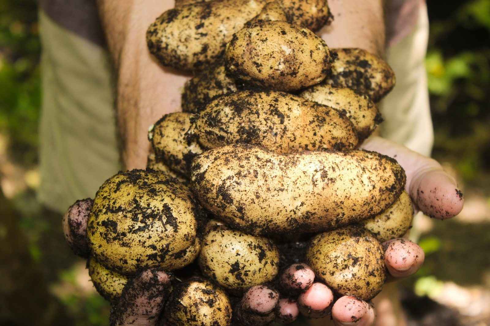 Teller statt Tonne - WWF ruft zur Rettung von Lebensmitteln auf - Green Chefs