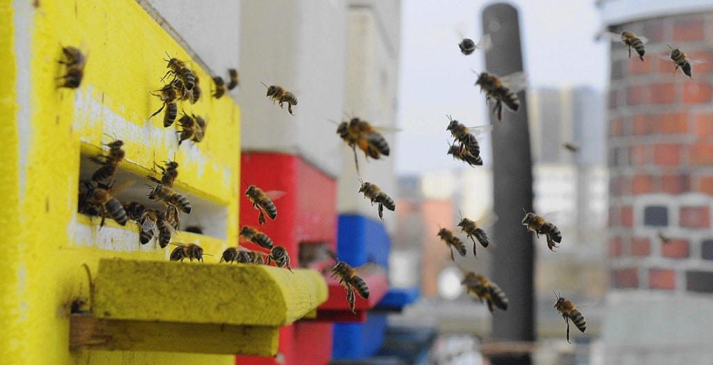 Urban Beekeeping Honig vom Balkon