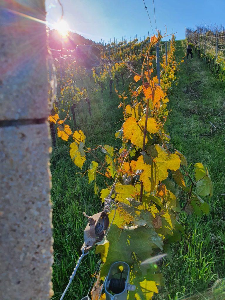 Vinisto Weingärten