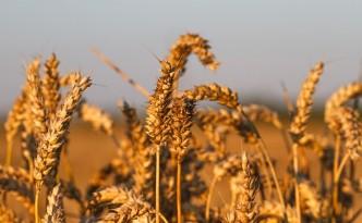 Zweifel an Lebensmittelsicherheit - GREEN CHEFS